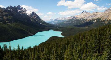 Peyto Lake, Canada sur Tashina van Zwam