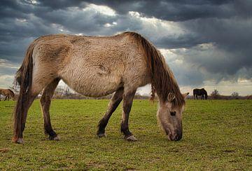 Wilde paarden van Rick van de Kraats