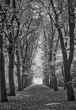 bomenlaan in de herfst van Ed Dorrestein