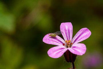 kleine roze bloemetje met bladluis. van mick agterberg