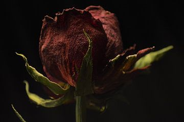 Stilleven van een roos van Lisanne Rodenburg
