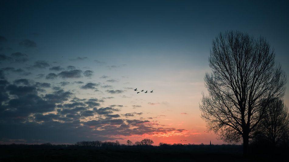 Morning glory van Lex Schulte