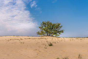 Loonse en Drunense duinen van Hans Stuurman