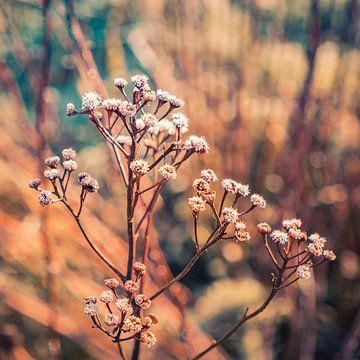 Tak droge bloemen in mooie warme tinten van Idema Media