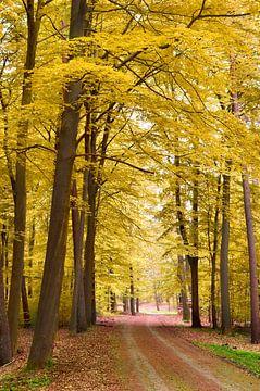 Gelber Wald von Corinne Welp