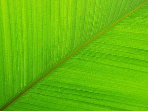 Groen palm blad