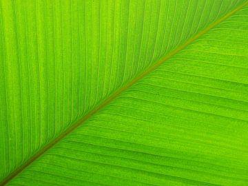 Grünes Blatt Symmetrie von Tessa Louwerens