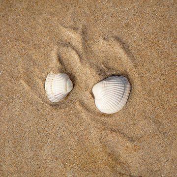 Schelpen op het strand van Johan Zwarthoed