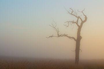 Mistige ochtend van Harm Roseboom