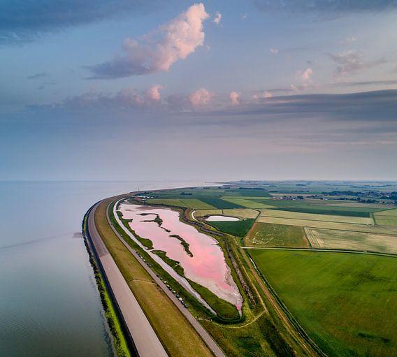 Roze Wagejot 2017 Texel van Texel360Fotografie Richard Heerschap