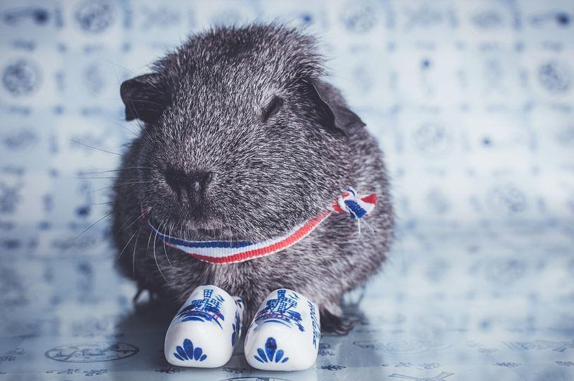 Dutch guinea pig van JBfotografie - jacindabakker.nl