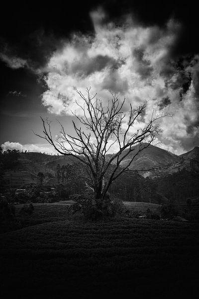 Ancient Tree van Insolitus Fotografie