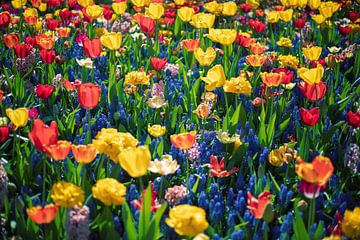 Bunte Blumen von Yana Spiridonova