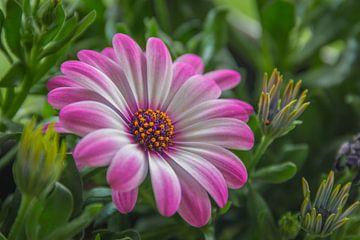 Roze bloem von Kees Korbee