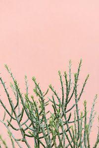 Groene plant tegen koraal roze muur | Botanische foto van Mirjam Broekhof