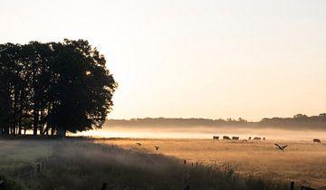 zonsopkomst in Nederlandse beekdal van Affect Fotografie