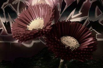 Blumen Streetart von Saskia Schotanus