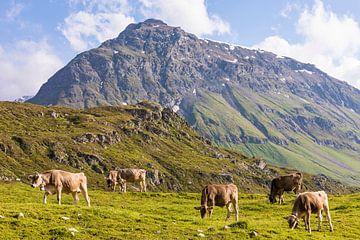 Kühe auf der Weide in der Schweiz von Werner Dieterich