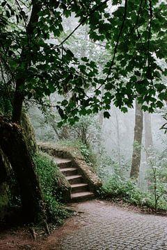 Eine Treppe mitten in der Natur von Sintra von Jessica Arends