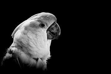 Der Kakadu von Hennie Zeij