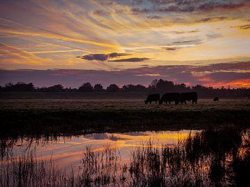 Weidende Kühe bei Sonnenaufgang von Jurgen Buijsse