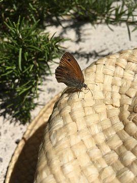 Strohhut unter Schmetterling sur
