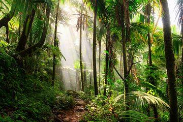 El Yunque Puerto Rico von Dennis van de Water