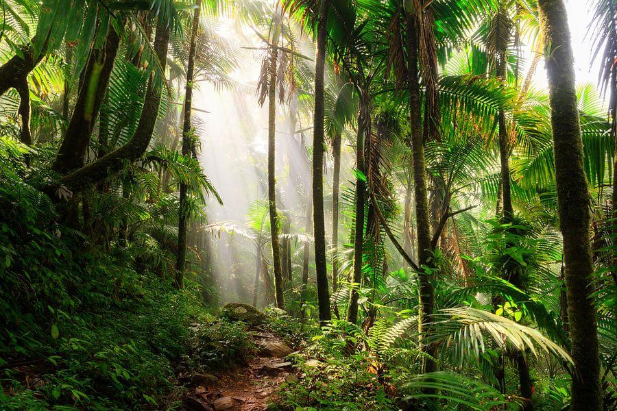 El Yunque Puerto Rico van Dennis van de Water