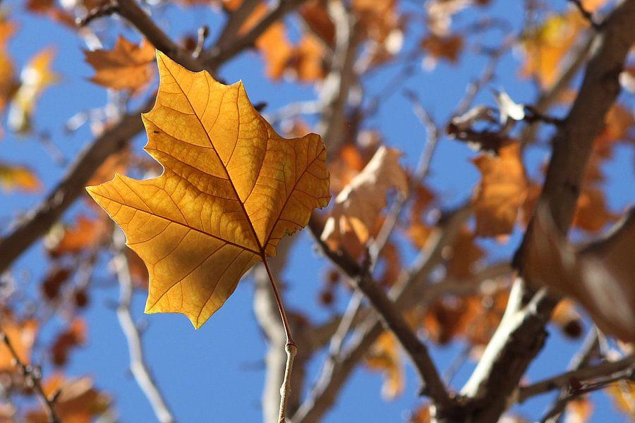 The Brown Leaf van Cornelis (Cees) Cornelissen