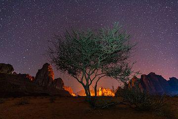 Wüstenbaum unter einem Sternenhimmel von Jeroen Kleiberg