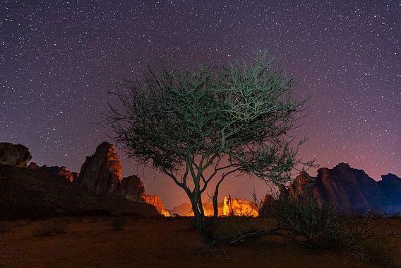 Woestijnboom onder een sterrenhemel