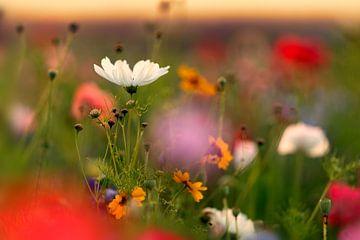 Sommerblumen von Sabine Böke-Bergau