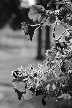 Bloemen in het zonlicht (zwart/wit) van Lisa-Valerie Gerritsen