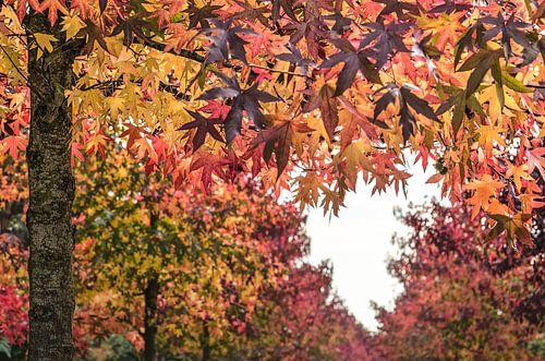 Hart voor de herfst