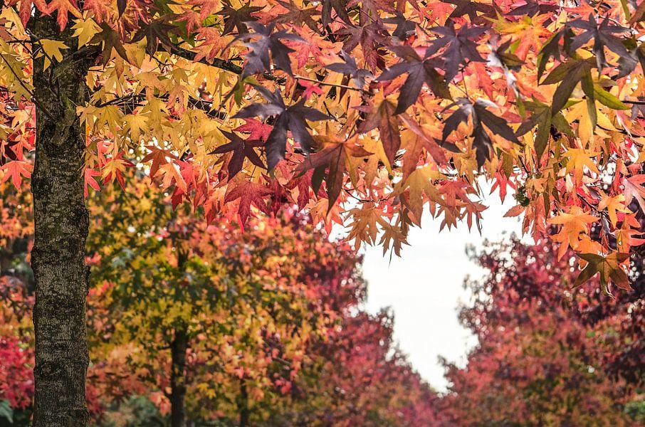 Ein Herz im Herbst von Frans Blok