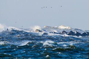 Vogels trotseren de storm bij de pier van IJmuiden van