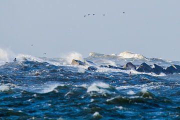 Vogels trotseren de storm bij de pier van IJmuiden van Menno van Duijn