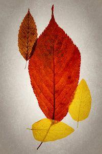 Herfst kleuren van Anneliese Grünwald-Märkl