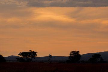 Zonsondergang Serengeti van Menno Selles
