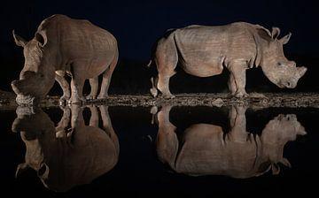 Twee wite neushoorns in de nacht spiegelen in het water van een drinkplaats van Peter van Dam