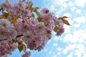 Frühlingswetter  sur zwergl 0611