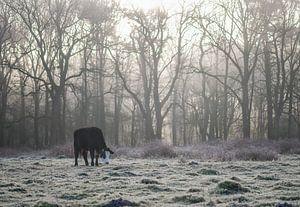 koe op een koude ochtend van Tania Perneel