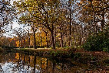 Herfst bij kasteel Westhove van Mario Lere