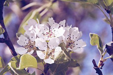 Appelbloesem van INA FineArt