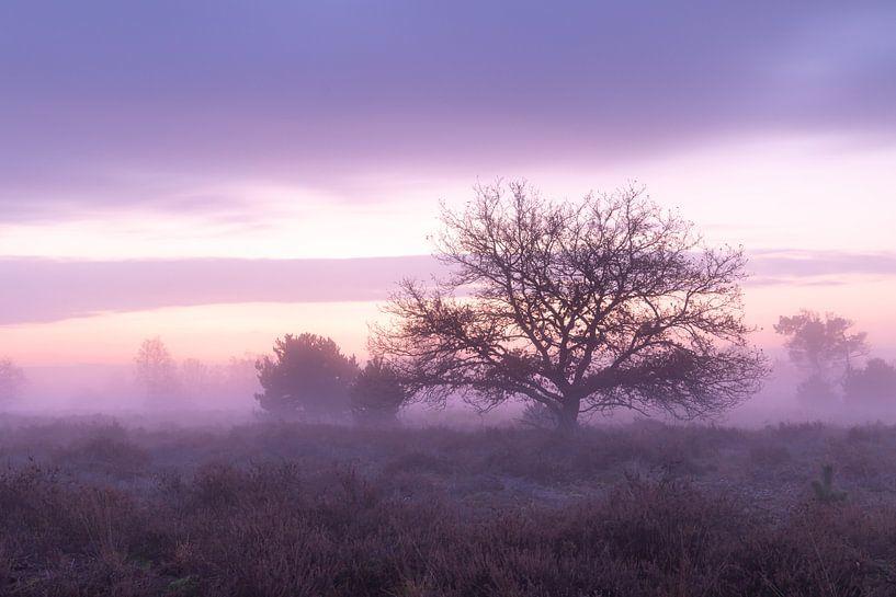 Morgenrood van Hetwie van der Putten