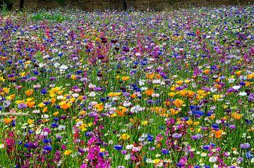 Ein fröhliches Blumenfeld von Hannie Kassenaar