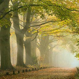 Zonnestralen bij ochtendmist langs bospad. Herfst van Frans Lemmens