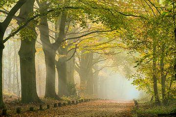 Sonnenstrahlen im Morgennebel entlang des Waldweges. Herbst von Frans Lemmens