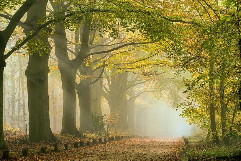 Rayons de soleil dans le brouillard matinal le long du chemin forestier. Automne sur Frans Lemmens