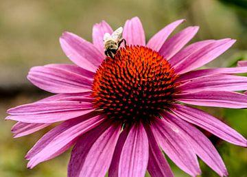Bijen von Stef De Vos